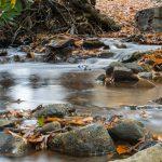 Fall Stream 2